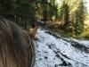 compr-ranch-horse-snow.jpg